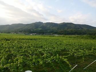 uenoyamawoody